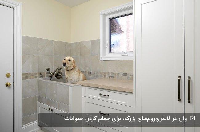 وان با سگ داخلش گوشه یک لاندری روم برای حمام کردن حیوانات