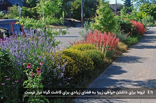 باغچه های پیاده رو محل مناسبی برای حضور پروانه ها و زنبورها می باشد
