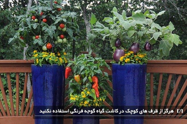 کاشت گیاه گوجه فرنگی در گلدان های آبی بسیار طویل