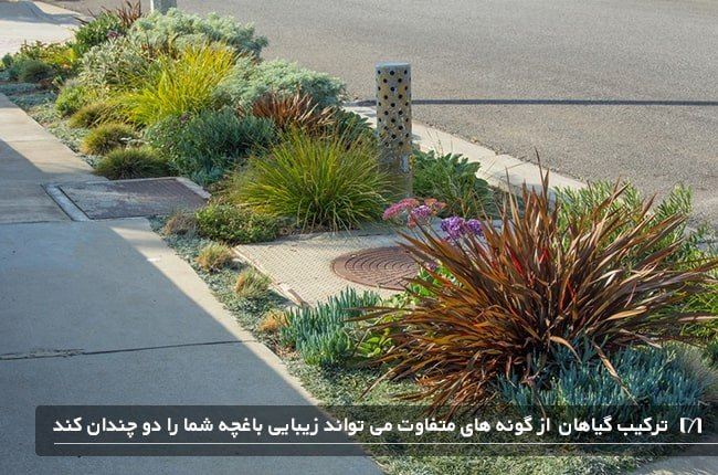 باغچه پیاده رو که با گیاهان مناسب و مختلف پوشیده شده است