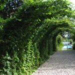 تصویری از تونل مخفی پوشیده شده با گیاهان