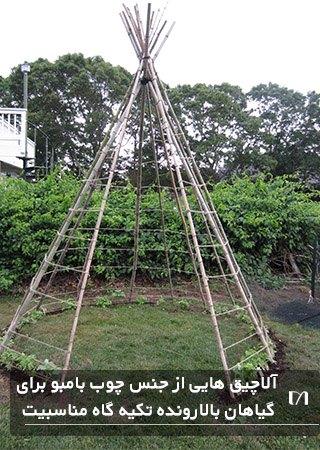 استفاده از چوب های بامبو آلاچیقی چادر مانند برای پرورش حبوبات