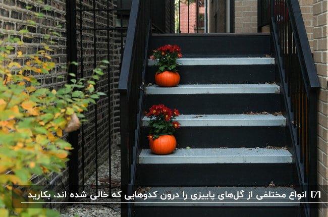 پله های مشکی ورودی خانه ای با تزئینات پاییزی کدوهای نارنجی به عنوان گلدان