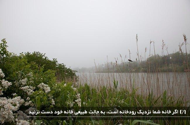 تصویر حیاط خانه ای کنار رودخانه که برای پرندگان پناهگاهی امن شده است و پر از علف های هرز است