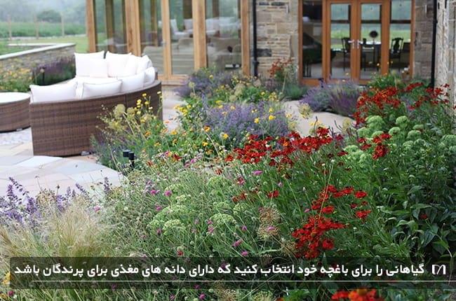 بوته های بزرگ با دانه های غذایی برای پرندگان در باغچه خانه