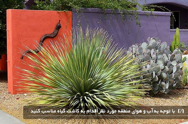تصویر باغچه پیاده رویی در منطقه کویری و خشک