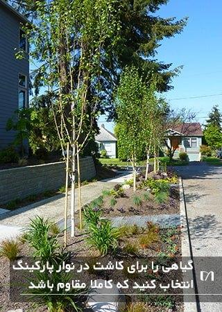 پیاده رو خیابانی که در آن گیاهان مقاوم و مناسب کاشته شده است