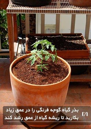 کاشت و پرورش گیاه گوجه فرنگی در گلدان و در عمق زیاد