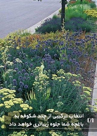 تصویر باغچه پیاده رویی با گل های شکوفه رنگارنگ و زیبا