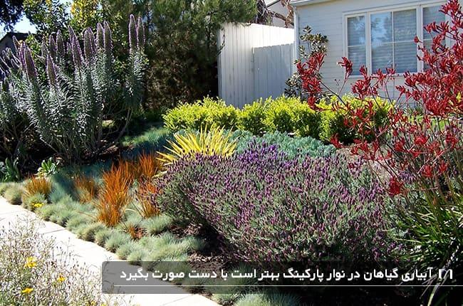 پیاده رو خانه ای با گیاهان متفاوت و شکوفه دار زیبا