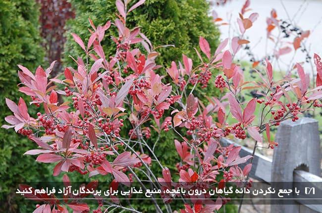 تصویر گیاهی صورتی با دانه های مغذی برای پرندگان آزاد