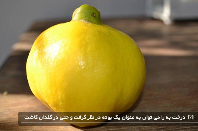 کاشت درخت محبوب به به عنوان درخچه در یک گلدان هم امکان پذیر است