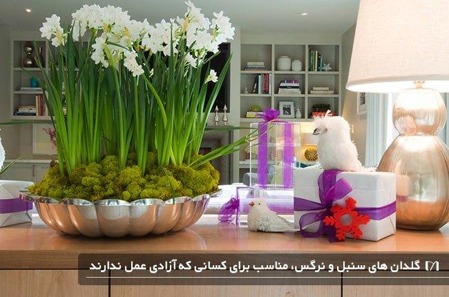 گلدان کوچک سنبل یکی از گل های بهاری زیبا و خوش بو