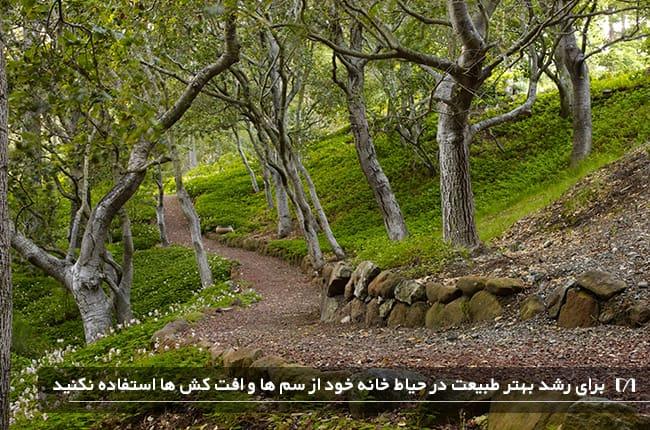 تصویری از طبیعت زیبا که در آن از سم و آفتکش ها استفاده نشده و خانه پرندگان است
