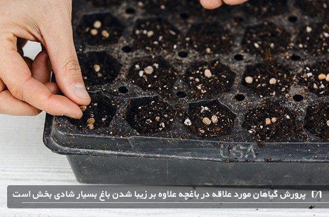 تصویری از پرورش و کاشت دانه های گیاهان و سبزیجات در فضای مخصوص