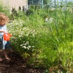 تصویری از آبیاری هفتگی یک قسمت از باغچه توسط کودک برای مسئولیت پذیر شدن