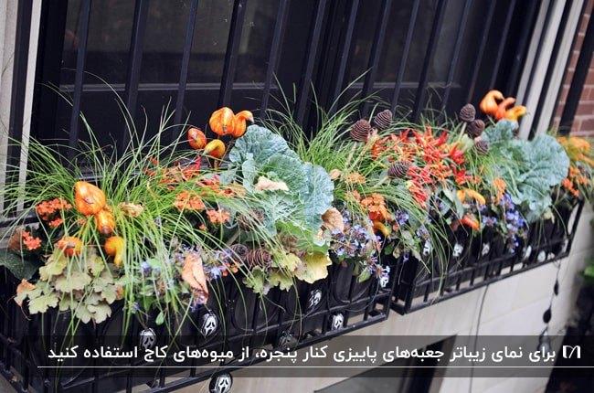 گلدان های پشت پنجره ای پاییزی با گیاهان پاییزی، کدوهای کوچک و کاج