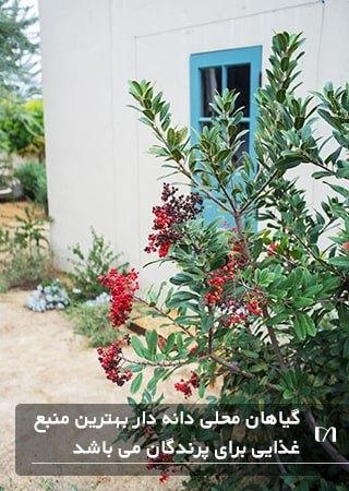 استفاده از گیاهان محلی و دانه دار روغنی در پناهگاه امن پرندگان