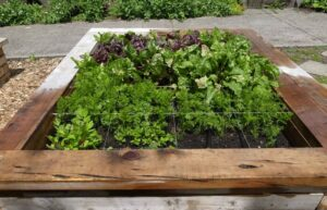انتخاب گیاهان مناسب برای کاشت