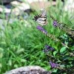 باغ سرسبز و پروانه زیبا روی برگ گل