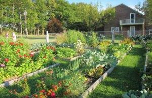 تصویر یک مکان مناسب برای قرارگیری باغچه