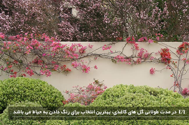 زیباسازی گیاهان پیچکی کاغذی روی دیوار با رنگ صورتی بسیار زیبا
