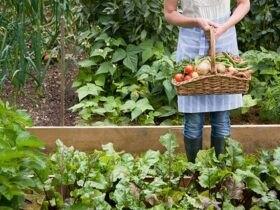 سبد و سبزی های پر از میوه خوراکی