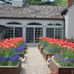 تصویر یک حیاط با باغچه هایی پر از گل های لاله برای مسیر ورودی