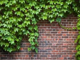 دیواری آجری پوشیده شده از پیچک