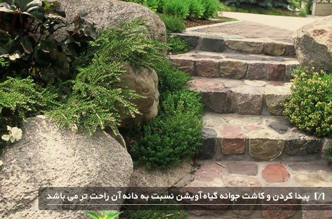 کاشت و نحوه نگهداری از گیاه آویشن در خانه