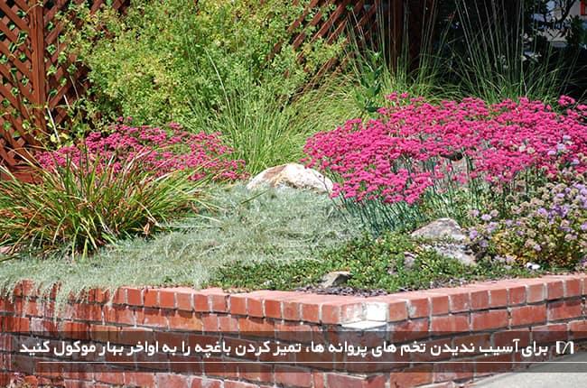 باغچه ای با گل های بنفش و بسیار زیاد با پروانه های جذب شده به آن