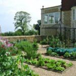 تصویری از باغچه های تفکیک شده برای هر گیاه در یک محوطه بزرگ