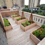 باغچه با باکس های چوبی در حیاط خلوت