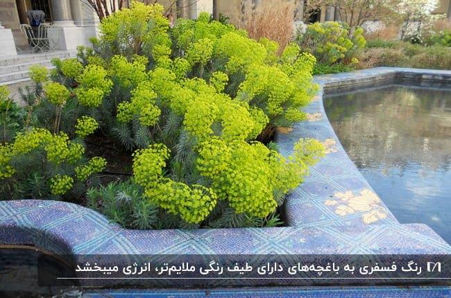 باغچه ای با گیاهان سبز و گل های فسفری
