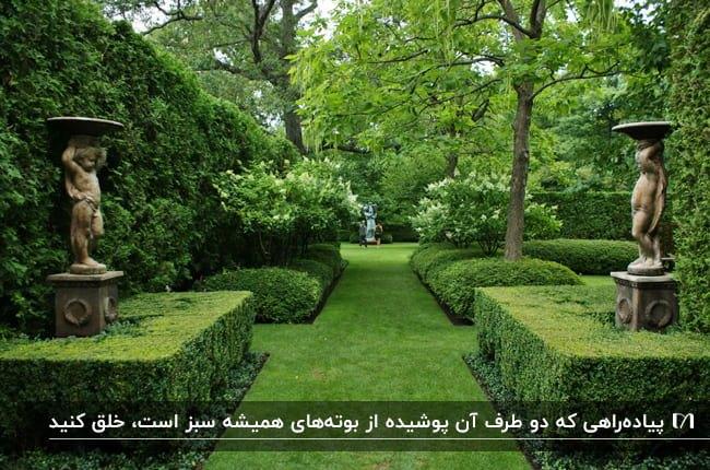 محوطه سازی و قاب بندی حیاط با استفاده از گیاهان همیشه سبز