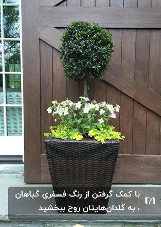 گلدانی قهوه ای که در آن یک درختچه، تعدادی گل ساقه دار و گلهای خزنده فسفری کاشته شده است