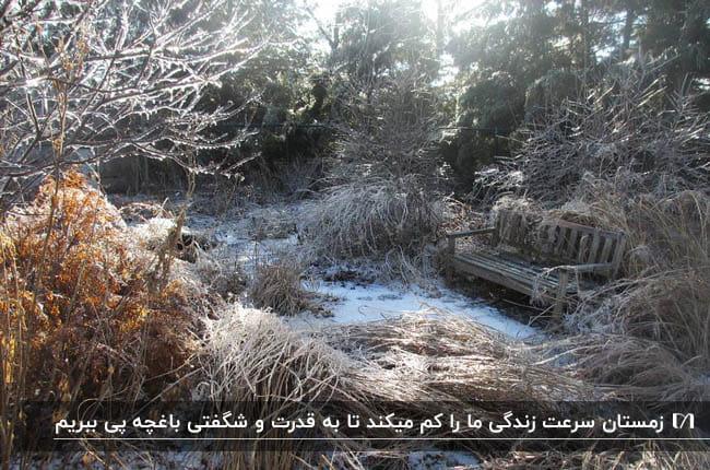 تصویری از یک منظره برفی با یک نیمکت چوبی زیر درخت