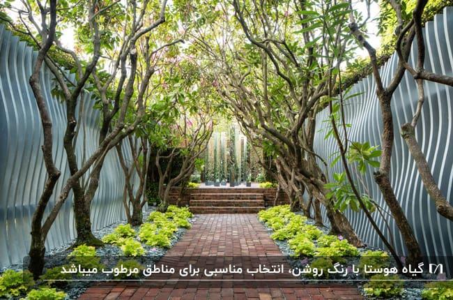 مسیر حیاطی که دو طرفش باغچه به همراه تعدادی درخت و گیاهان فسفری دارد