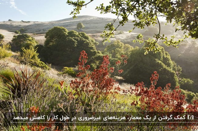 تصویر فضای باز خانه ای با درختان و گیاهان متنوع