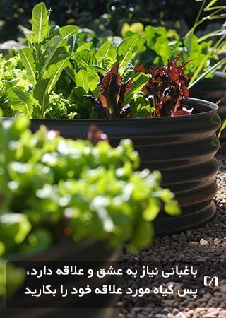 در باغبانی های خود هر گیاهی که به کاشت آن علاقه دارید را بکارید