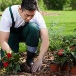 باغبان درحال کاشتن گل قرمز در باغچه