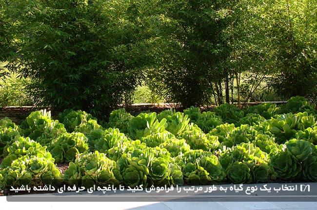 به عنوان یک باغبان حرفه ای از کاشت گیاهان تکراری خودداری کنید