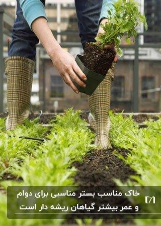 تصویری از خاک و گیاهان درحال کاشت روف گاردن