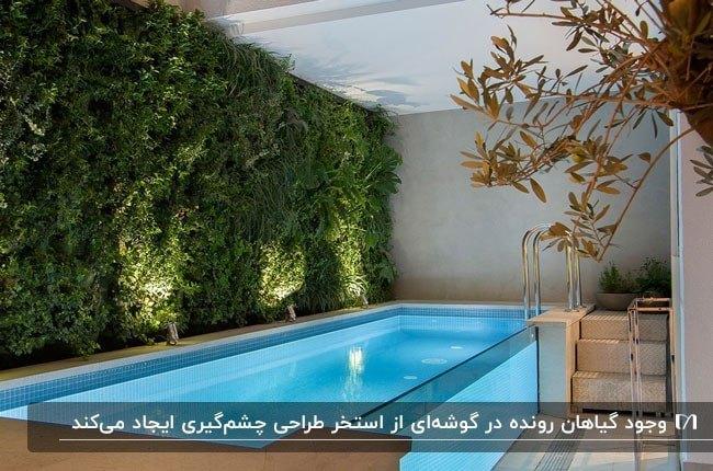 تصویری از استخری که یک سمتش را گیاهان رونده تا سقف پرکرده اند