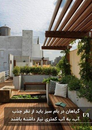 بام سبزی با سقف، کف و مبلمان چوبی با گیاهان متنوع