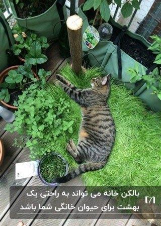 گوشه ای از بالکن که با چمن برای گربه در حال استراحت است