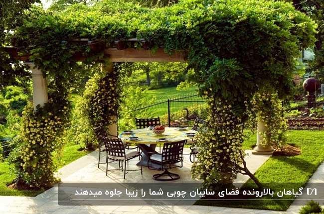 تصویری از یک سایبان چوبی که دور ستون ها و سقفش را گیاهان پر کرده اند