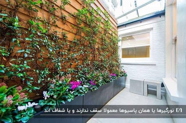 پاسیویی با دیوار چوبی و باغچه ای با گیاهان رونده روی دیوار و سقف شیشه ای