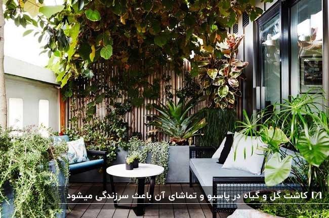 نورگیری با مبلمان طوسی مشکی و درخت ها و گیاهان کاشته شده و گلدانی