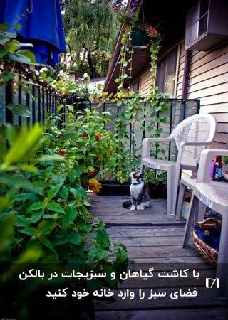 بالکن خود را به باغچه ای برای کاشت گیاهان و سبزیجات تبدیل کنید